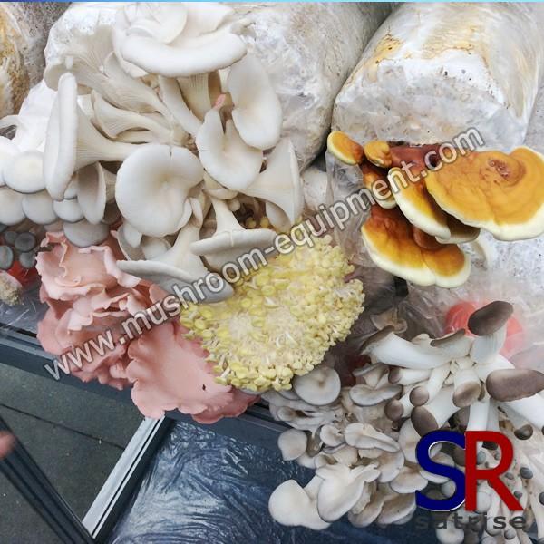 mushroom spawn bag