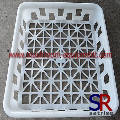 high quality PE plastic tray for mushroom growing