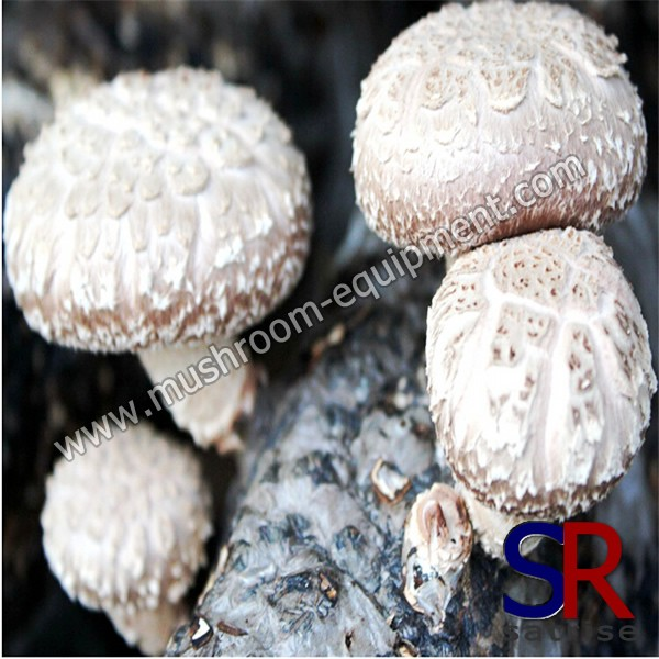 mushroom log,log mushrooms